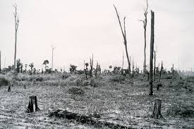 Effects on Environment - Defoliants Used During the Vietnam War