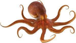 Octopus PNG
