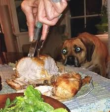 I Wish Someone Would Look At Me The Way Dogs Look At Food | Funny animal  photos, Funny dog pictures, Funny animal pictures