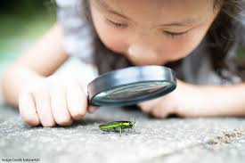 "Fostering Curiosity in the Classroom: ""What Percentage of Animals are  Insects?"" 