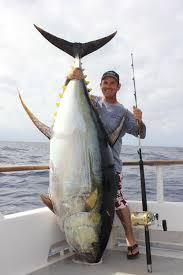 67 Best Big Fish images in 2020 | big fish, fish, monster fishing