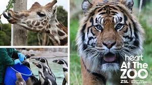 Heart at London Zoo: We go behind the scenes to see the animals and their  keepers... - Heart